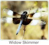 Mitigation Dragonfly