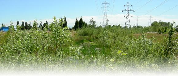 Mitigation Powerline