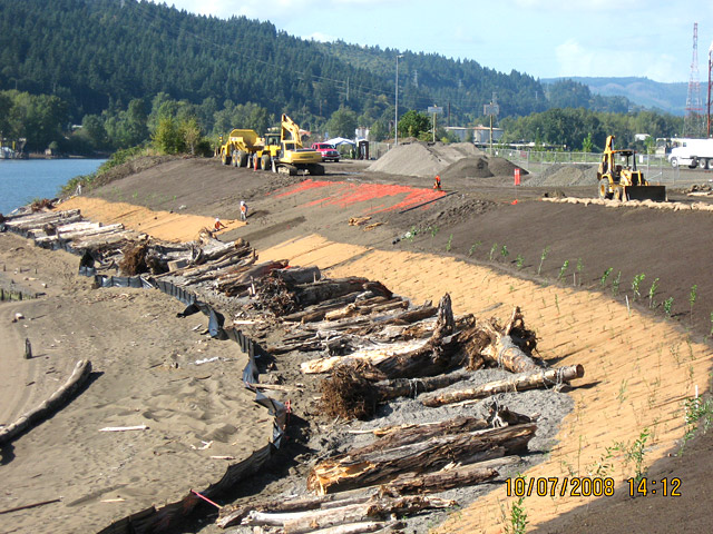 Wheeler Bay: Contractor placing demarcation fabric, jute matting and native plants on last section of slope. This part of the site was used as the contractor's temporary equipment access ramp.