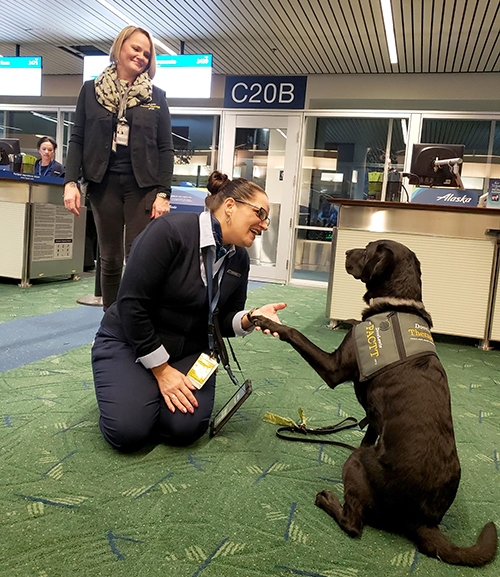 Dog Therapy photo in the airport